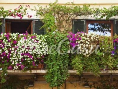rampicanti da balcone, piante rampicanti, rampicanti